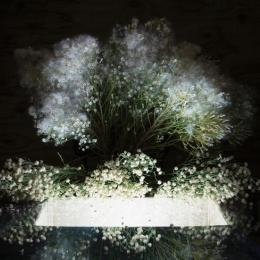 """Baccharis Sarothroides, Desert Broom"" 2016."
