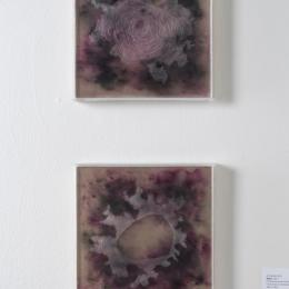 Amanda Tufts, Onion 1 and 2, Dura-lar between etched plexiglass, 2017.
