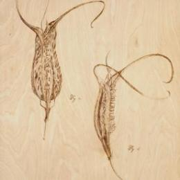 """Tabulae Quatour"" 2011. Wood burning. 15"" x 26"""