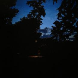 """Dusk on Maple"" 2012. Oil on panel. 60"" x 36"""