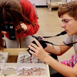 Students photographing butterfly specimens in the ASU life sciences collection in the summer camp, Photo + Life Sciences