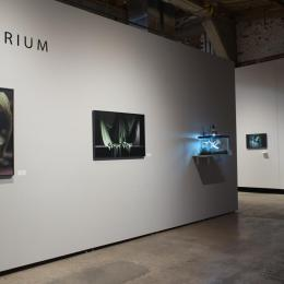 """Vivarium"" Exhibition Photo. 2016."